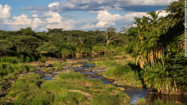 A small river flows through palm-lined shores in a lush savannah grassland in Serengeti National Park.