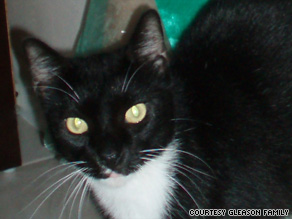 The death and mutilation of Tommy the cat has been linked to a serial pet killer, say police in Miami, Florida.