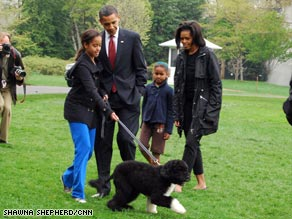 Some breeds touted as better for people with allergies; think the Obamas and their Portuguese water dog Bo.