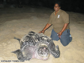 Suzan Lakhan Baptiste's efforts have turned a beach from a leatherback turtle graveyard to a nesting colony.