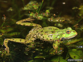 A frog swims in a pond in Munich, Germany, in June.