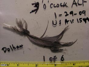 A  feather found inside one of the engines of the plane that ditched in the Hudson River.