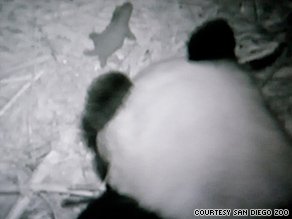 The public can view live video of the cub and its mother, Bai Yun, on the zoo's Web site.