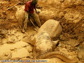 A baby elephant in the Gourma region of central Mali had been trapped in a well for three days.