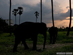 A new plan aims to return street elephants to the wild by paying owners for the animals.