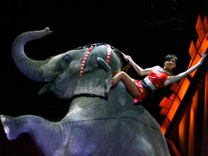 A performer rides an elephant during a live performance of Ringling Bros. and Barnum & Bailey Circus.