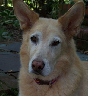 Charlie Moore's dog, Conrad.