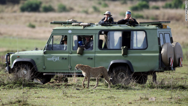 Travel agents often specialize in trips that involve more decisions and logistical challenges such as cruises and safaris.
