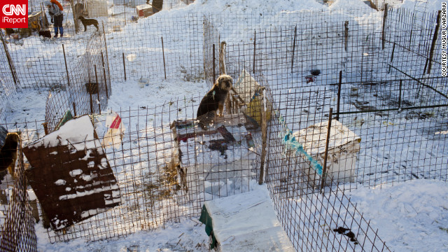 """<br/>Animal lovers helped remove the snow that covered the """"second chance"""" dog shelter outside Glina, Romania, on Saturday, January 28."""