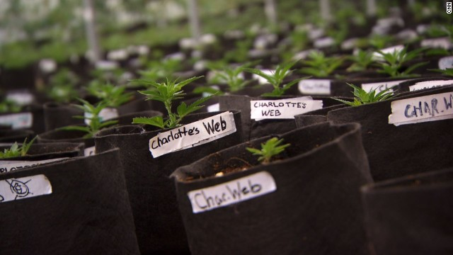 The marijuana strain Charlotte and 41 other people use to help their symptoms has been named after her. It's called Charlotte's Web.