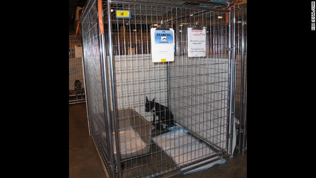 """This black pit bull mix panics at the sight of a person. His ears stand straight up and he cowers in the corner of his cage as his body trembles. The sign on his cage says., """"I¹m FEARLFUL, please go slowly."""