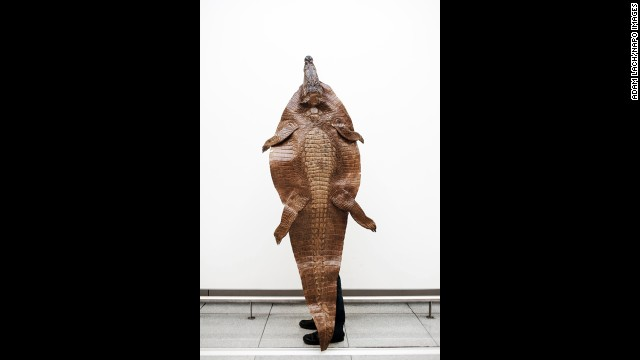 A traveler wanted to bring back this Nile crocodile to use as a bathroom rug.
