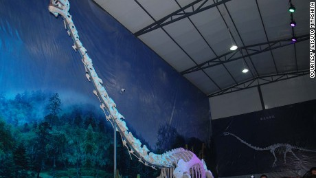 The reconstructed skeleton of Qijianglong in Qijiang Museum in China