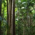 Australia Gondwana Rainforests RESTRICTED