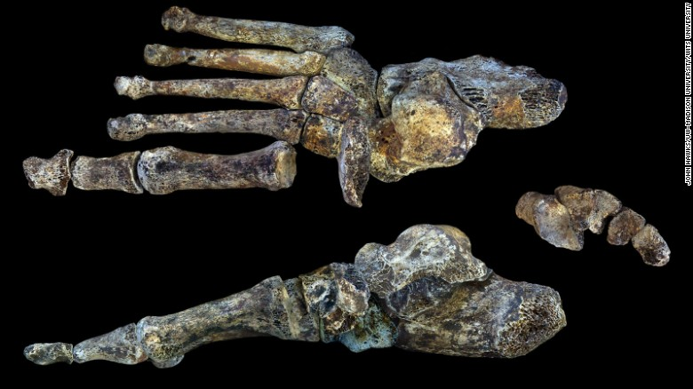 Homo naledi's feet are almost identical to ours -- indicating that it was well-suited to long distance walking.