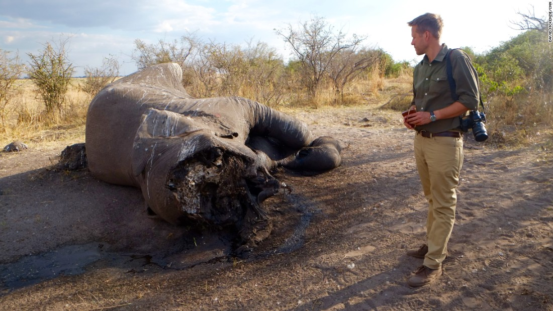 Elephant ecologist Mike Chase examines an elephant whose face was hacked off by poachers in Botswana.