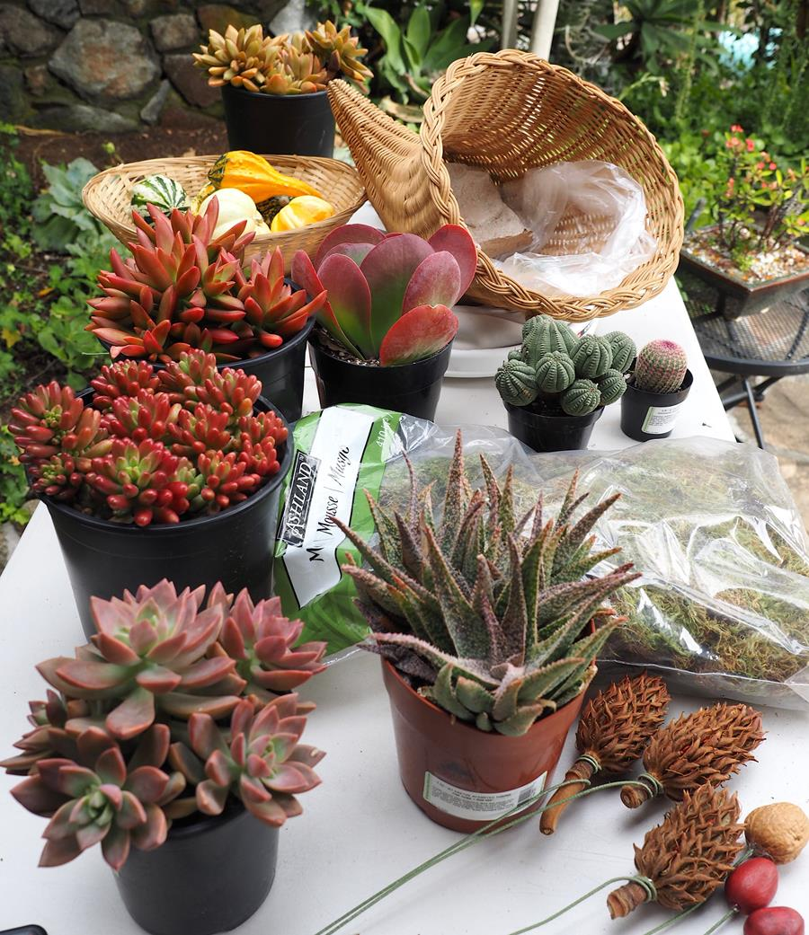 Plants and materials for succulent cornucopia