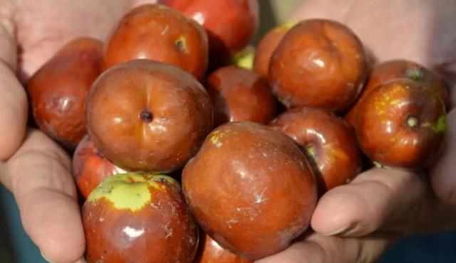 Hünnap meyvesinin faydaları nelerdir? Hünnap hangi hastalıklara iyi gelir?