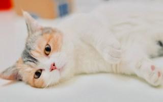 【D梦】跟女朋友一样粘人不让出门的猫咪你见过吗
