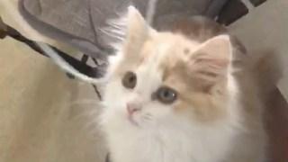 2月大的猫就是皮