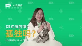 29 你家的猫会孤独吗