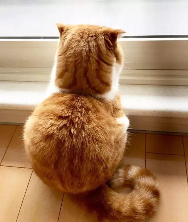 講真!佩服那些養橘貓的鏟屎官…… - 每日頭條