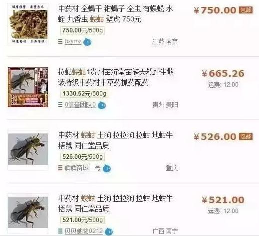 農村隨處可見的蟲子賣3000一斤!這天價蟲子其實你也吃過 - 每日頭條