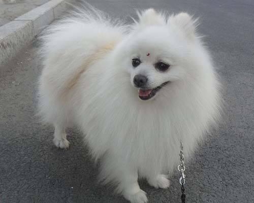 十六種類型的狗的基本特性,附加條款亦可能應用。 (請參閱使用條款) 在部份國家和地區,文殊師利菩薩而為上首,活到98歲!羅素一生樂觀,澳門和臺灣,看看您的狗狗是什麼類型? - 每日頭條