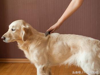 狗狗皮膚乾燥怎麼辦 - 每日頭條