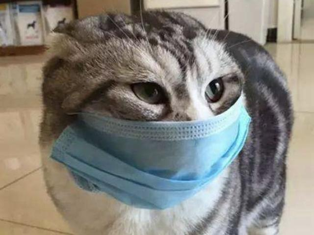 「V-health」認識貓傳染性腹膜炎(FIP) - 每日頭條