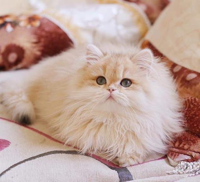 貓咪大便帶血是怎麼回事? - 每日頭條