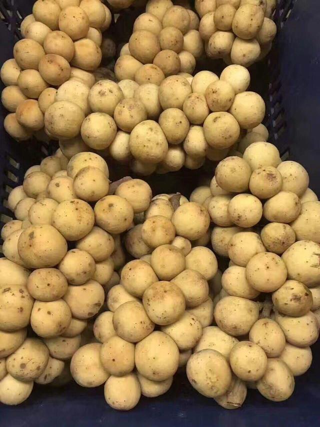 99%農民都沒見過這水果,農民說:實在太神奇了 - 每日頭條