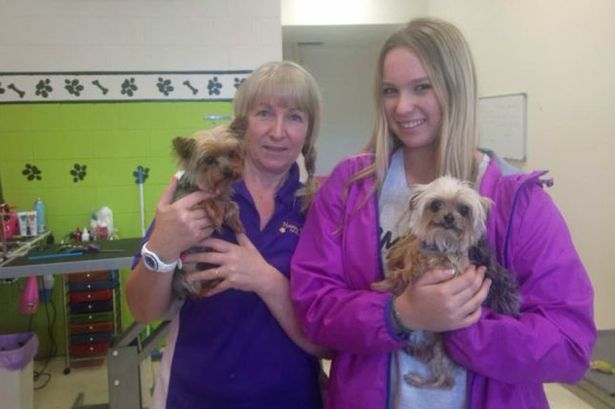 Lianne Kent and Elly Kent Johnny Depp's Yorkshire terriers Pistol (l) and Boo (r) at Happy Dogz groomers on the Gold Coast, Australia