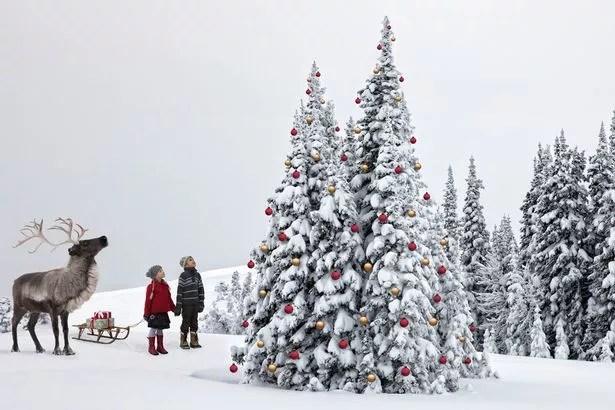 Image result for white christmas