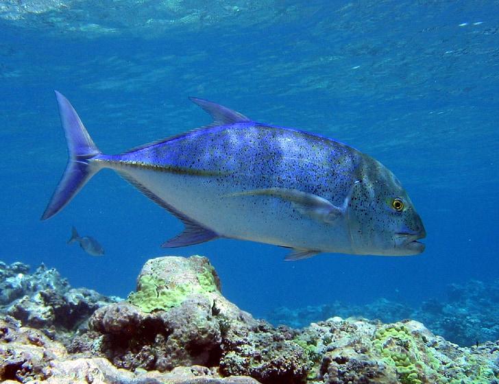 gray fish underwater at daytime