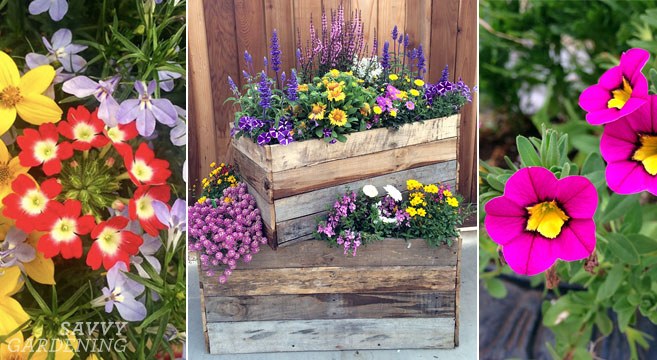 container plants for full sun choices