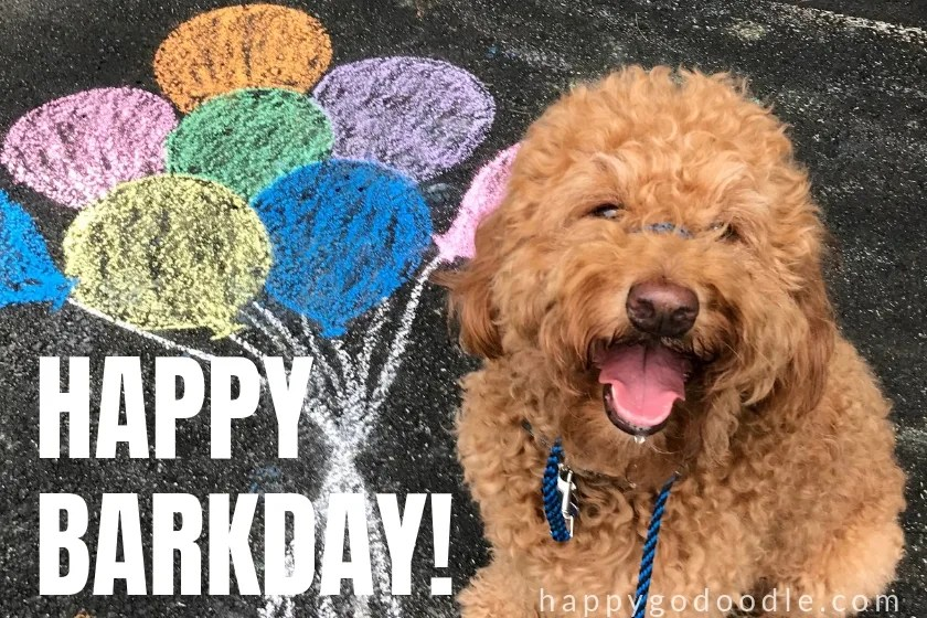 20 Happy Birthday Dog Memes That Will Make Your Barkday Even Brighter Happy Go Doodle