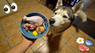 Download What Feeding Raw To My Husky Looks Like! Video