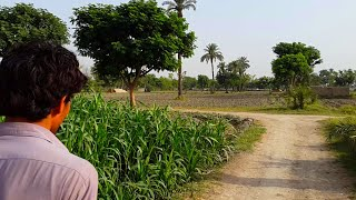 Download Pakistani Village Life In Punjab | Tubewell Water Video