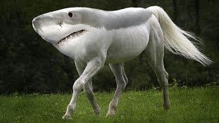 Download Top 10 Most Amazing Hybrid Animals You Won't Believe Actually Exist Video