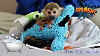 Download Baby Monkey oLLie Bath & Diaper Time!! Video