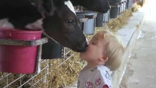 Download Cows Are Awesome: Compilation Video