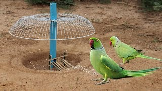 Download Best way to installed Parrot trap Using electric fan guard and blue pipe - Parrot trap technology Video