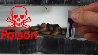 Download Extracting Cyanide From Apple Seeds With Hydraulic Press Video
