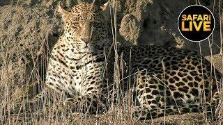 Download safariLIVE - Sunrise Safari - July 14, 2019 Video