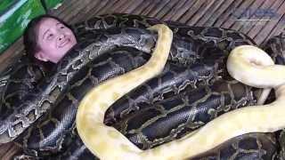 Download Adrenaline Junkies Have Snake Massage Video