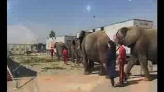 Download Vorschau: Jana, Elefanten & Exoten im Circus Krone (Nr. 92) Video