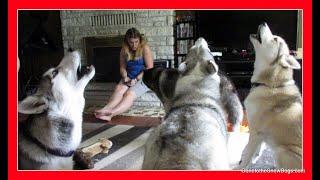 Download HOWLING HUSKIES | Last day of YouTuber Weekend! Video