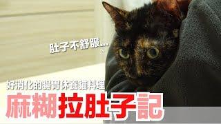 Download 麻糊拉肚子...做能幫助腸胃休養的貓料理!【好味貓鮮食廚房】EP124 Video
