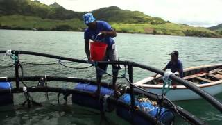 Download Cage construction, GMP and value addition in the small scale mariculture sector Video